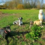 Die bunte Hundetruppe