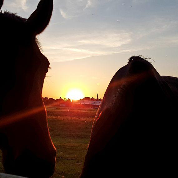 Pferde genießen die letzten Sonnenstrahlen am Abend.